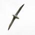 Albatross (image credit: Tony Dunn)